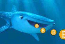 تصویر نهنگ بیت کوین در چه سطحی فشار فروش زیادی ایجاد کرد؟