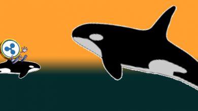 انتقال 230 میلیون ریپل توسط نهنگ های بازار