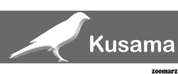ارز کوساما Ksm چیست؟