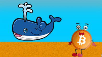 مورد نهنگ ها در حال خرید بیت کوین بیشتر
