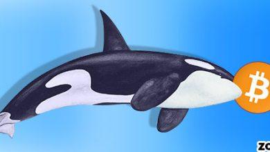 جا به جایی بیش از 7 هزار بیت کوین از سوی نهنگ ها