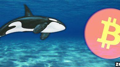 خرید جدید بیت کوین از سوی نهنگ ها