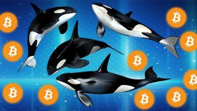 افزایش فعالیت بزرگترین نهنگ های دوج کوین