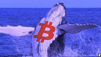 نهنگ ها همچنان به خرید بیت کوین ادامه میدهند