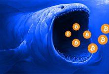 نهنگ های بیت کوین در اوج قدرت خود