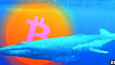 آیا نهنگ های بیت کوین در حال دامپ کردن دارایی خود هستند؟