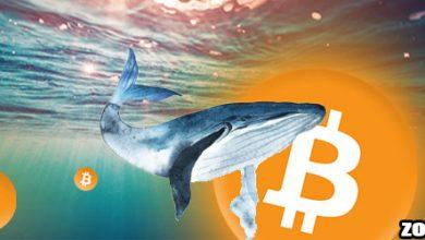 نهنگ ها به دنبال خرید بیت کوین