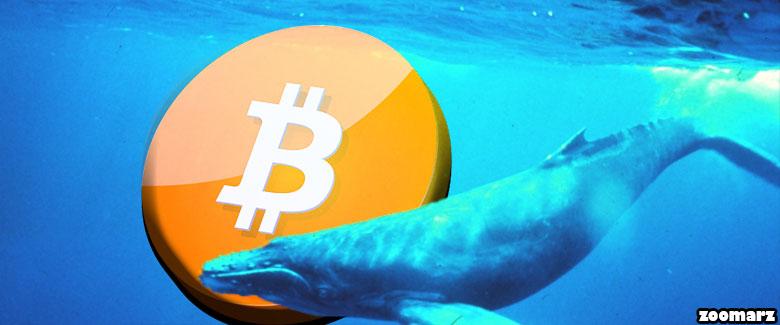 آیا نهنگ ها در حال بازی کردن با قیمت بیت کوین هستند؟