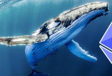 جنب و جوش نهنگ های اتریوم