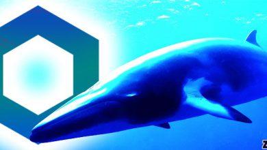 خبر جدید: 25 درصد از کل لینک ها در اختیار نهنگ ها