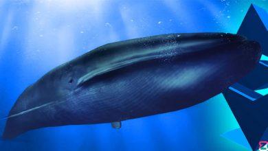 ادامه فعالیت نهنگ های اتریوم در قیمت بالا!