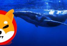 نهنگ ناشناس 276 میلیارد واحد شیبا اینو خرید