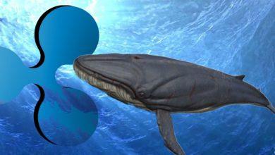 جنب و جوش نهنگ های XRP